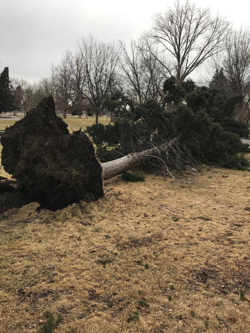 image of Parks and recreation Damage