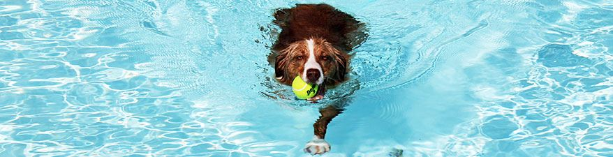 2016 Pueblo Parks and Rec - Pups at the Pool