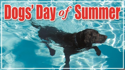 Black Lab swimming in pool